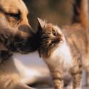 Pets & Pet Loss